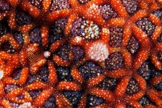 macro photograph of a sea star by Alexander Semenov