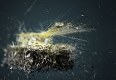 Polybombs by andreas martini, via Behance