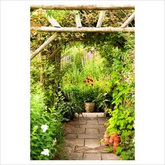Wooden pergola swathed with golden hop and clematis frames a view to pots of pompon dahlias and a small pond