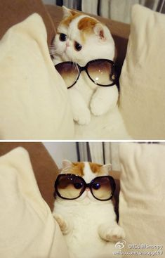 my cats need shades...