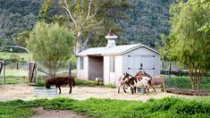 "Garden Guardians    Sicilian donkeys are no more than a yard high and very sweet and interactive. ""They're also protectors,"" says Steve. ""There are mountain lions and coyotes in the area, and the donkeys keep everybody away."""