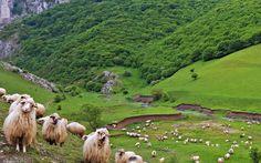 A Tordai hasadék Romania, Golf Courses, Youtube, Animals, Instagram, Animales, Animaux, Animal Memes, Animal