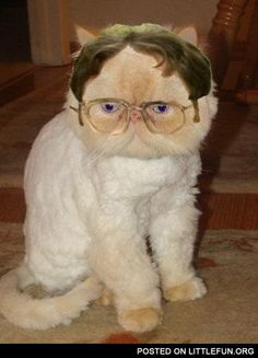 Dwight Schrute Cat I want this kitty!!!