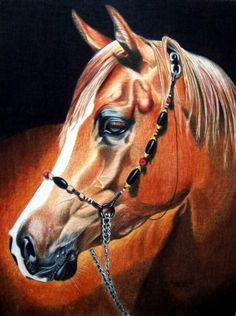 A Horse of Course by anniecanjump.deviantart.com on @deviantART