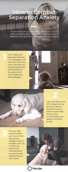Separation anxiety is tough for both dogs and their owners and can lead to disruptive and destructive behavior. This Petcube infographic gives three solid tips on how to help your dog or puppy deal with separation anxiety.