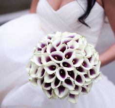 I want the theme of purple and white for my wedding! I love these type of flowers does anyone know what type they are?