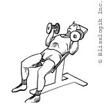 Beast Gym: Dumbbell Exercises for the Chest Dumbbell Chest Workout, Chest Workouts, Dumbbell Exercises, Incline Bench, Chest Muscles, Breath In Breath Out, Bench Press, Beast, Palms