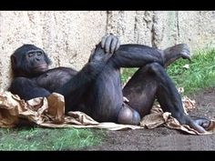 Funny Videos Of Funny Animals Compilation 2014 | NEW - http://www.gigglefinger.com/funny-videos-of-funny-animals-compilation-2014-new/