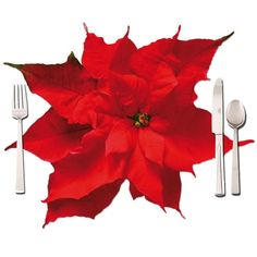 Click on the image to get the #flower #placemat with photo of a red poinsettia. The table place mat is printed both sides with the same motif. Size 50x40cm. https://www.rosemarie-schulz.eu/en/placemats/428-poinsettia-placemat.html