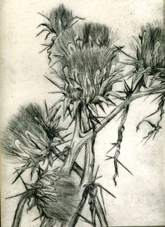 I did this etching many, many years ago. Only pulled 10 images.but I only have one left. Botanical Drawings, Botanical Art, Intaglio Printmaking, Drypoint Etching, Art Alevel, Etching Prints, Faber Castell, Illustrations, Copic