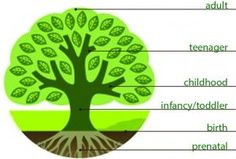 trauma tree - a great explanation of PTSD in children. can demonstrate when trauma occurred the growth afterwards is negatively affected....