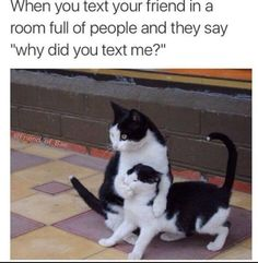 Yeah n that moment really awful funny bunnies, funny bunny videos, funny animal videos Funny Animal Memes, Funny Animal Videos, Funny Animal Pictures, Funny Relatable Memes, Funny Texts, Funny Animals, Funny Jokes, Funny Best Friend Memes, Hilarious