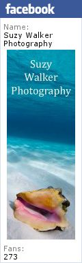 New Photos from Florida « Memoirs of an Underwater Photographer   Suzy Walker again