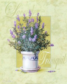 Lavender by T. C. Chiu