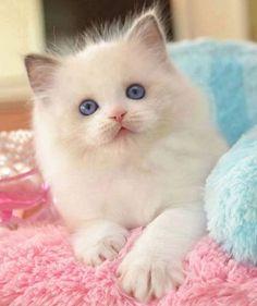 (via kitten …what a sweetheart via Cute as a Kitten ❤ | Pinterest)