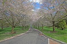 Pretty entrance driveway lined with spring blossoming trees... a lovely way to greet you home.