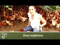 Como escolher seus ovos (série Ovos parte 1) - YouTube