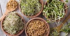 Los germinados son el alimento vivo más antiguo y pueden hacerle mucho bien a tu salud. Haricot Azuki, Sprouts Vegetable, Diet Recipes, Vegan Recipes, Green Plants, Sin Gluten, Succulents, Clean Eating, Good Food