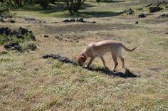 Wandern auf Sizilien mit Hund   TravelDog.at Kangaroo, Dogs, Animals, Sicily, Hiking, Pet Dogs, Baby Bjorn, Animales, Animaux