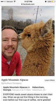Jake FilgoDance Gavin Dance (+friends) Swanposting 7 hrs ·    whats Tim doing with this alpaca?