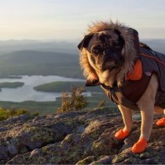 Camping with dogs! #newlifegoal
