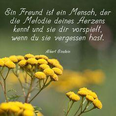 Ein Freund ist ein Mensch, der die Melodie deines Herzens kennt und sie dir vorspielt, wenn du sie vergessen hast. Albert Einstein.