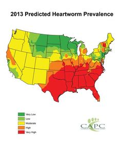 Heartworm Prevention Key to Reduce Disease Threat in 2013 | CAPC Vet