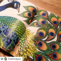 Here's another great pic that I found at a Repost from Love the color combinations, beautiful dont you think? Keep posting your coloringpics for others (and me) to see at or Thanx! Enchanted Forest Book, Enchanted Forest Coloring Book, Coloring Tips, Adult Coloring, Colorful Drawings, Cute Drawings, Hanna Karlzon, Polychromos, Colouring Techniques