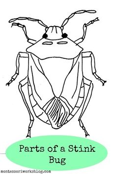 Free Parts of a Stink Bug Cards from Montessori Works