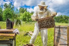 Beekeeper is working with bees and beehives on the apiary. Bee Keeping, Royalty Free Photos, Bees, Clip Art, Stock Photos, Flowers, Image, Royal Icing Flowers, Flower