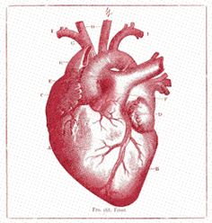 gif heart cardio Scientific Illustration animators on tumblr stephen loveluck heart pumping scientific animation