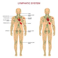 Plant Therapy Lymphatic Drainage Ginger Oil – map of lymph nodes in the body Lymph Fluid, Water Retention Remedies, Lymphatic Drainage Massage, Calendula Benefits, Oil Benefits, Coconut Health Benefits, Plant Therapy, Lymphatic System, Physical Therapy