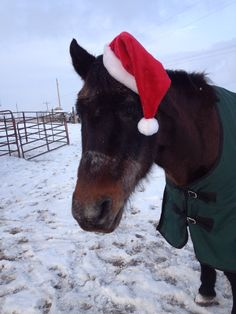 Thanks Becky! Costume Contest, Christmas Costumes, Cow, Horses, Animals, Animais, Christmas Fancy Dress, Animales, Animaux