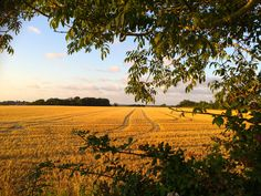 evening harvest www.mossandstone.co.uk