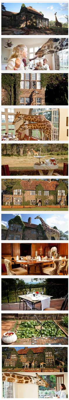 Giraffe Manor, Kenya : Amazing ! I definitely want to go there one day !
