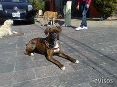 ENTRENAMIENTO CANINO A DOMICILIO, DIVERTIDO Y GARANTIZADO  ADIKAN¡¡ el mejor lugar para tu mascota!! ofrece los sigui ..  http://naucalpan.evisos.com.mx/entrenamiento-canino-a-domicilio-divertido-y-garantizado-id-598207