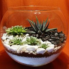 Selecting Plants for Container Gardening Occasionally, landscaping your home can be difficult, but most of the time it appears harder than it actually is. Terrarium Bowls, Succulent Bowls, Succulent Centerpieces, Succulent Gardening, Succulent Arrangements, Succulent Terrarium, Container Gardening, Terrarium Ideas, Succulents In Containers