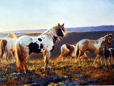 """Horses and a colt on the range bringing a new day Image Size 12"""" x 9"""" Open Edition"""