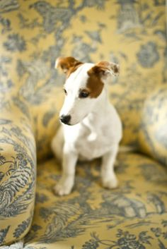 Cléo, the jack russel puppy 5 by Making Magique, via Flickr