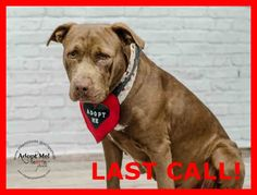 LAST CALL! LAST CALL! LAST CALL! LUCY (A1667681) I am a female red and white Pit Bull Terrier mix. The shelter staff think I am about 5 years old and I weigh 54 pounds. I was found as a stray and I am available for adoption. Miami Dade https://www.facebook.com/urgentdogsofmiami/photos/pb.191859757515102.-2207520000.1420055502./900080533359684/?type=3&theater