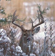Deer Hunting: Deer Hunting Tips, Deer Blogs, Deer Photos, and Deer Articles from Field & Stream