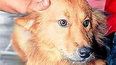 Dog Saves Abandoned Baby's Life