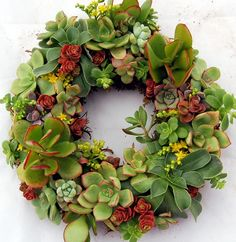 Succulent Wreath DIY Holiday Project