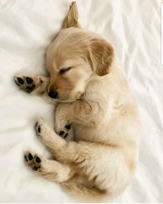 tiny sleeping Golden Retriever puppy & cute animal pictures 10 Adorable Puppies Playing In. The post 10 Adorable Puppies Playing In Their First Snow [PICTURES] & Dogtime appeared first on Travers Rottweilers. Super Cute Puppies, Cute Baby Dogs, Cute Little Puppies, Cute Dogs And Puppies, Cute Little Animals, Cute Funny Animals, Adorable Puppies, Doggies, Cutest Puppy