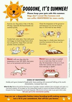 Protect Your Dogs From Heat Stroke
