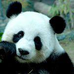 Animales salvajes en peligro de extinción