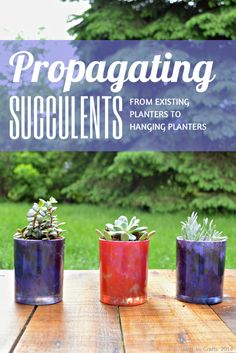 Replant succulent cuttings in hanging pots to great new plants! Replanting Succulents, Succulent Cuttings, Growing Succulents, Succulent Gardening, Succulent Terrarium, Cacti And Succulents, Garden Plants, Container Gardening, Planting Flowers