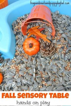 Fall Sensory Table with sunflower seeds, mini pumpkins, pine cones, etc! Sensory Tubs, Sensory Boxes, Sensory Activities, Sensory Play, Toddler Activities, Sensory Diet, Indoor Activities, Fall Sensory Bin, Family Activities