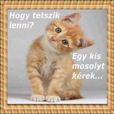 Hungarian Tattoo, Holidays And Events, Famous Quotes, Good Morning, Diy And Crafts, About Me Blog, Geek Stuff, Memes, Cats