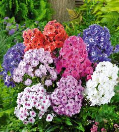 Syysleimu mix Fall Plants, Division, Beautiful Flowers, Roots, Centerpieces, Floral Wreath, Spring, Summer, Gardening